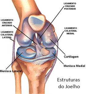 estrutura-do-joelho